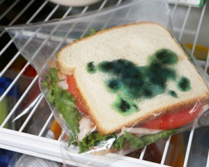 moldy sandwich prevention